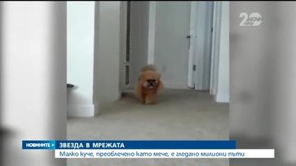 Куче-мече стана в мрежата - Новините на Нова
