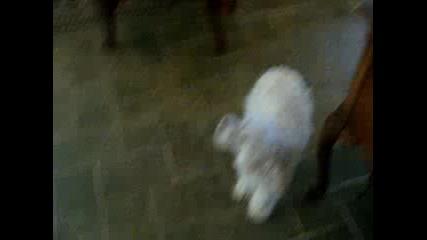 Много гладни кучета
