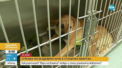 Брутално посегателство срещу куче в София