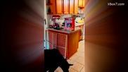 Какаду раздава кучешка храна