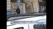 """Изсъхнал клон падна върху кола на улица """"Иван Вазов"""" в Пловдив и за малко не уби пешеходец"""