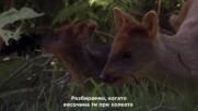 Най-странните животни в Южна Америка | Сърната Пуду