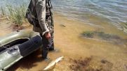 Релийз на бяла риба 5