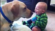 Кучета учат бебета .. компилация2014