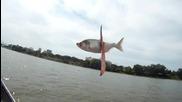 Риболов like a Boss