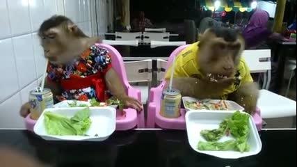 Маймунки обядват в заведение