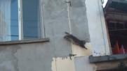 Котка акробат