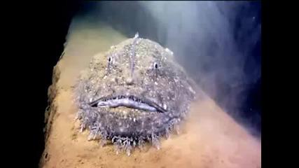 Странна Риба
