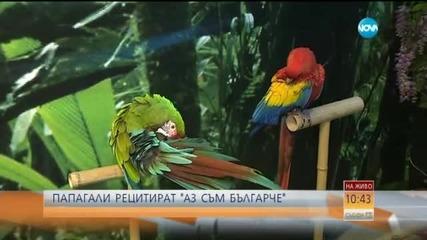 """Папагали рецитират """"Аз съм българче"""""""