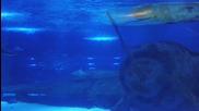 Най-големият аквриум-тунел - Турция част 2