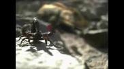 Разходка Със Чудовища - Преди Динозаврите 4