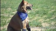 Първото куче в света с 4 протези...