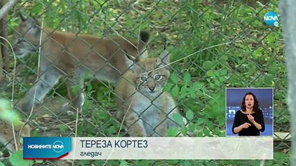 Кога ще могат посетители на столичния зоопарк да се порадват на новите му попълнения