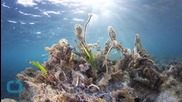 How One Company is Turning Ocean Pollution Into Fashion