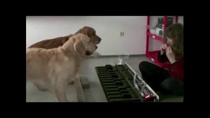 Егати музикалните кучета