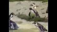 Пингвин Парти