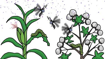 Тайният социален живот на растенията..