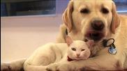 Куче и коте се обичат ..
