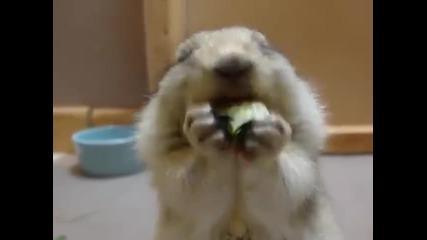 Сладка катеричка яде краставица!