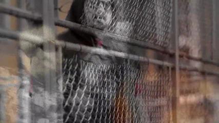 JENTARO - ПО-ВИСОКО [STREET VIDEO]