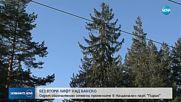 """ВАС отмени окончателно промените в плана за управление на парк """"Пирин"""""""