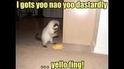 Най - смешните котки на света!
