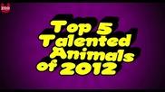 Топ 5 на най-талантливите животни на 2012 г.