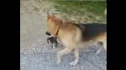 куче и котка кой кого обикаля