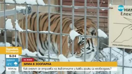 Животните в Софийския зоопарк се зарадваха на първия сняг