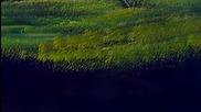 S05 Радостта на живописта с Bob Ross E02 - здрачна поляна ღобучение в рисуване, живописღ