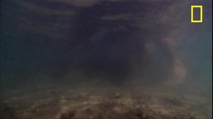 Каменната риба - един опасен хищник