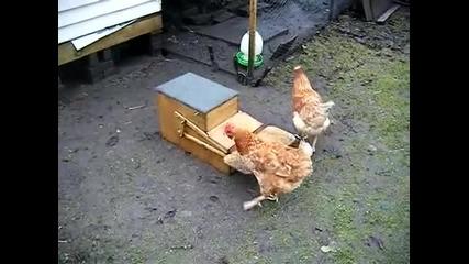 Такава хранилка за кокошки не сте виждали !!!