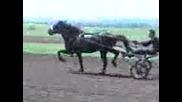 sastezanie s kone v bres kon krupie akrundo 2013 g
