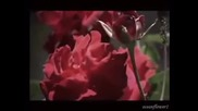 The Rose of Tralee - Phil Coulter ( Relaxing music )