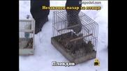 Незаконен пазар за птици 6