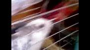 Зайчето Дори