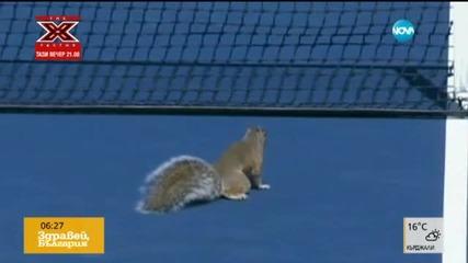 Катерица спря мач на US Open