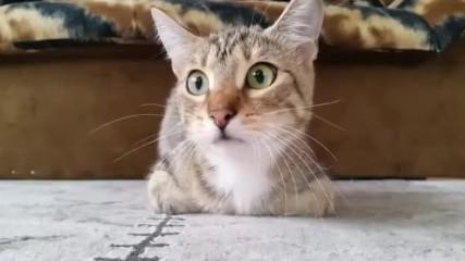 Котка реагира на филм на ужасите