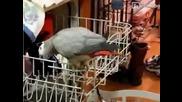 Непослушен папагал