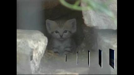 Показаха четири новородени пясъчни котета в израелски зоопарк