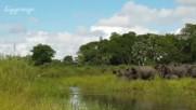 Слонче-късметлия се измъква от челюстите на крокодил