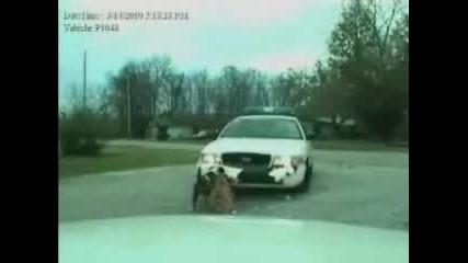 Pitbull напада полицейска кола