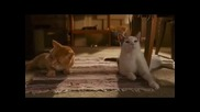 напушени котки 2