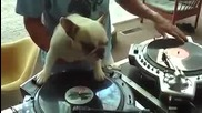 Куче Свири На Грамофони