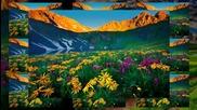 Цветовете на природата ... ...