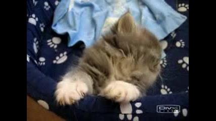 Спяща Котка  - Много Сладка