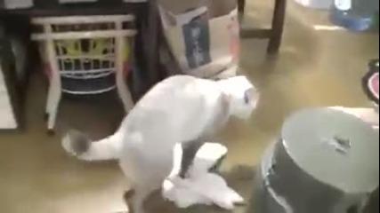 Котка старателно почиства дома на стопаните си ... На всички ни е нужна такава котка