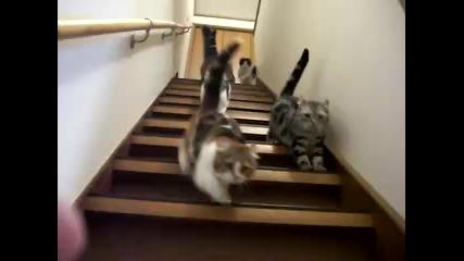Доста гладни котки слизат по стълбите !!