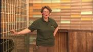 Бебета в зоопарка (Zoo Juniors) S03E01