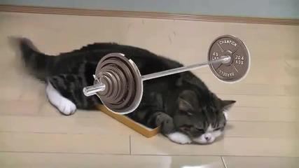 Котка в кутия (rap)